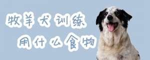 牧羊犬训练用什么食物